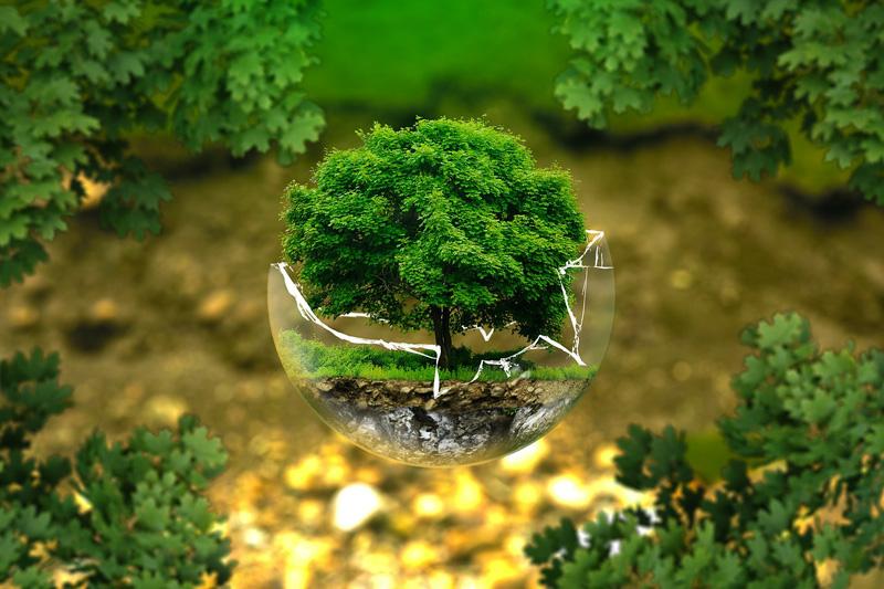 Ampoule basse consommation et écologie